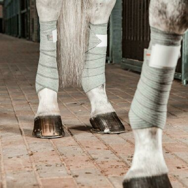 Incrediwear Equine Circulation Pintelit